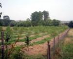 Плантация в Пловдивско