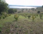 Шуменска плантация